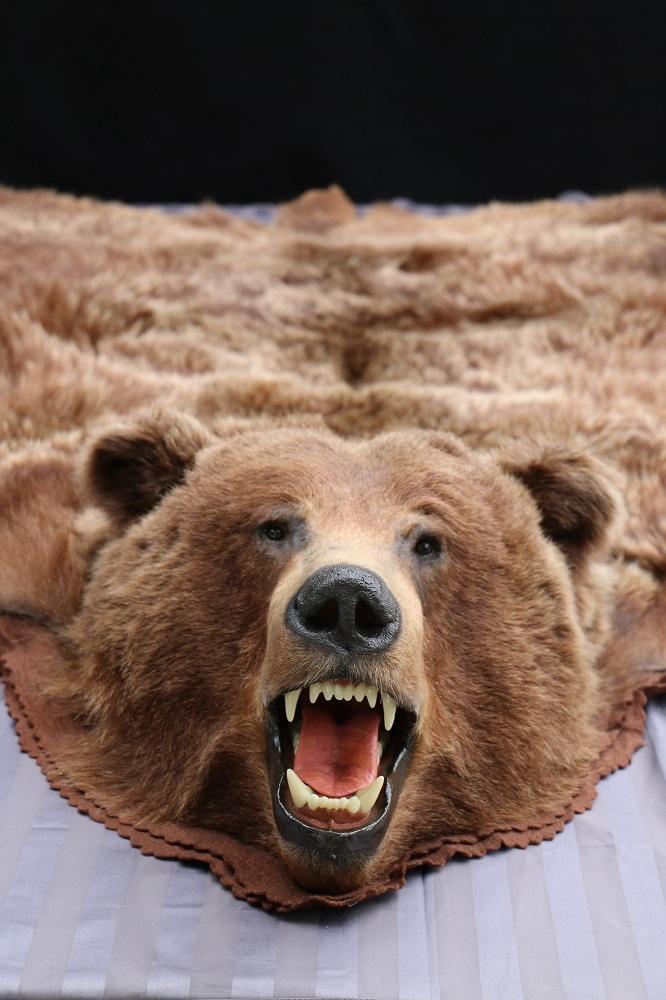 the faux regard skin rug hidden bearskin bear image agenda polar to of superb x with