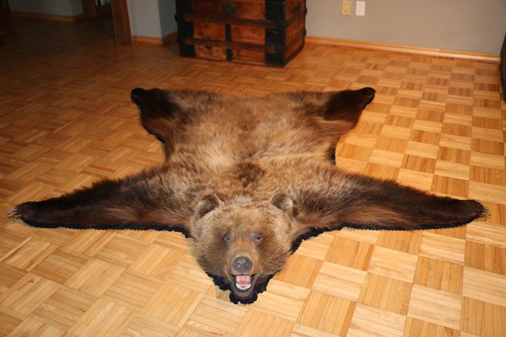 Grizzly Bear Rug